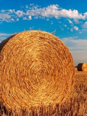 straw-bales-